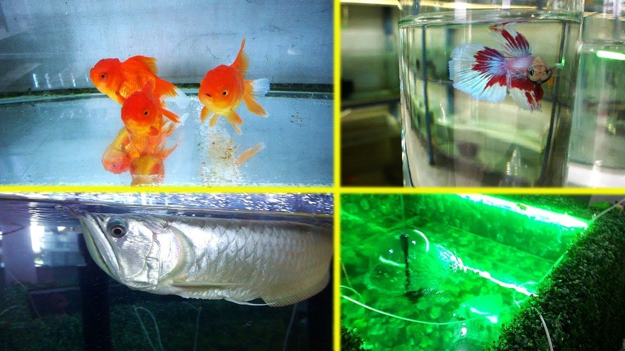 Anju Aquarium Shop College Jn Nattakom Kottayam Kerala Aquarium Shop Fish Aquarium Shop Aquarium Accessories Aquarium