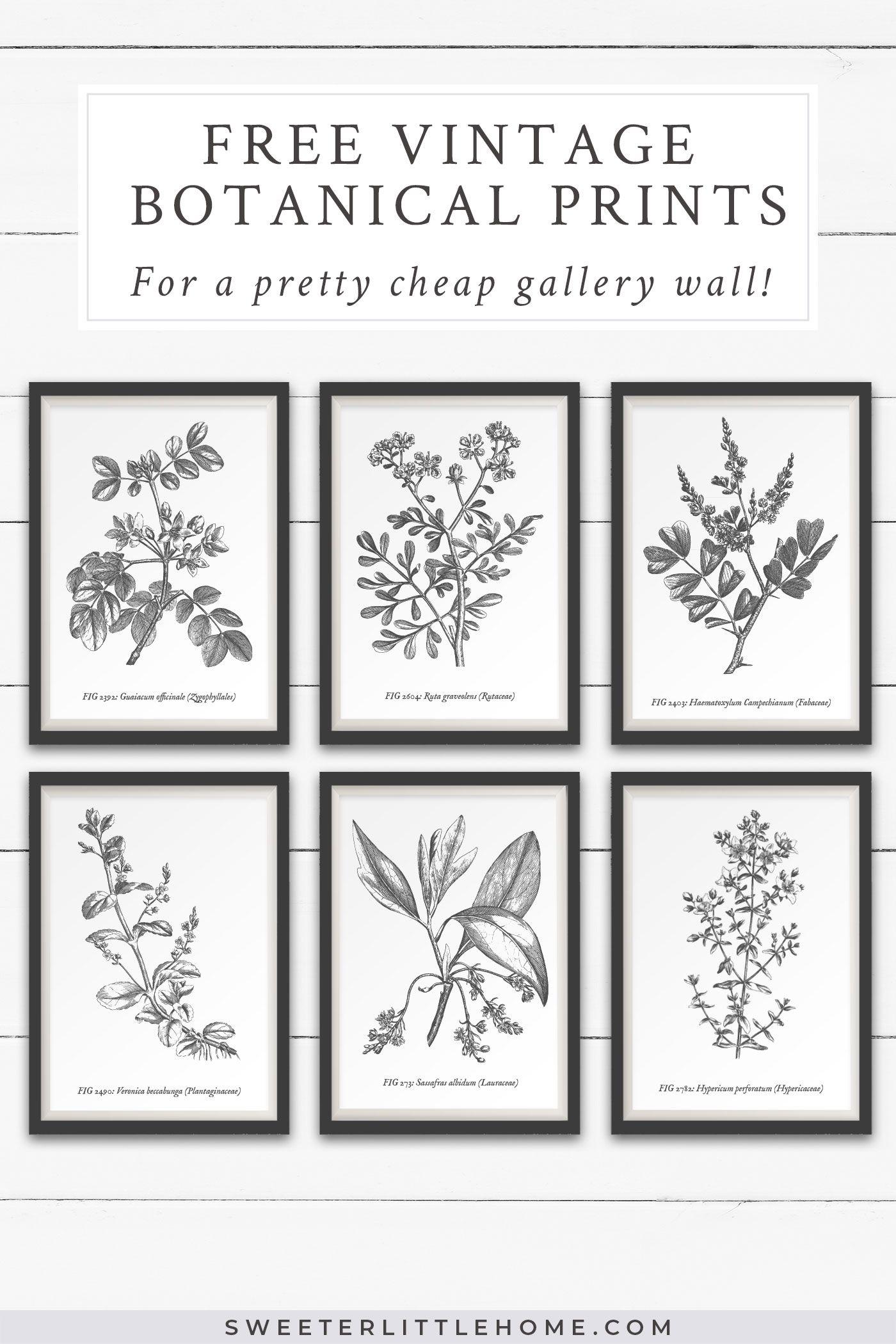 Photo of Free vintage botanical prints wall art