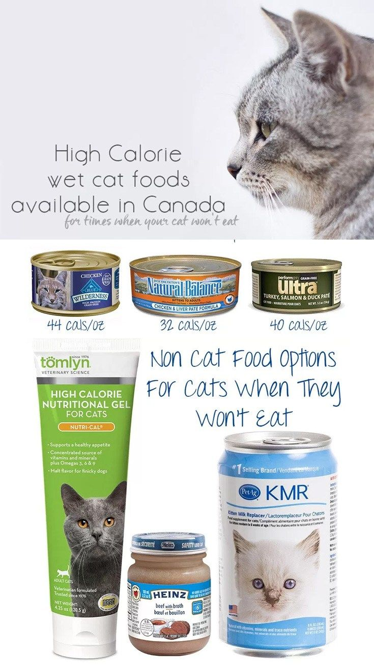 High Calorie Alternatives To Hills A D For Feeding Your Underweight Cat Cats Sick Cat Wet Cat Food