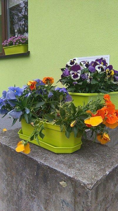 Kolorowe Kwieciste Inspiracje Na Wiosne Bratki Na Hydroboxie Hydrobox Hydroboxpl Kwiaty Bratki Florystyka Kompozycje Diy Flo Pansies Planters Plants