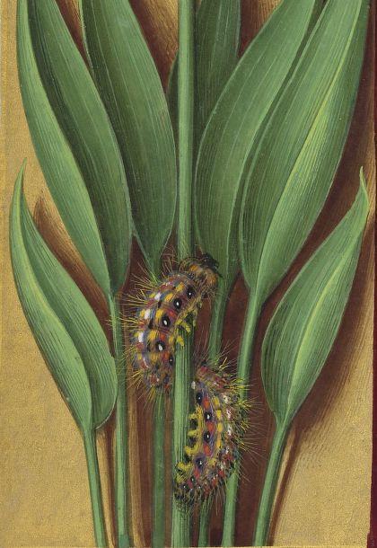 Grandes Heures d'Anne de Bretagne. 1684 - 217v