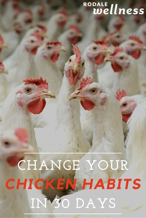 Humanely raised chicken is within reach. | Rodale Wellness