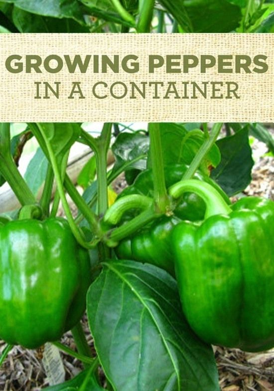 10 Easy Container Gardening Ways To Grow Vegetables 400 x 300