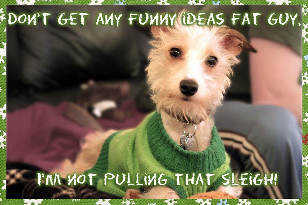 Christmas Card Ideas for your Dog - ROMP Italian Greyhound ...