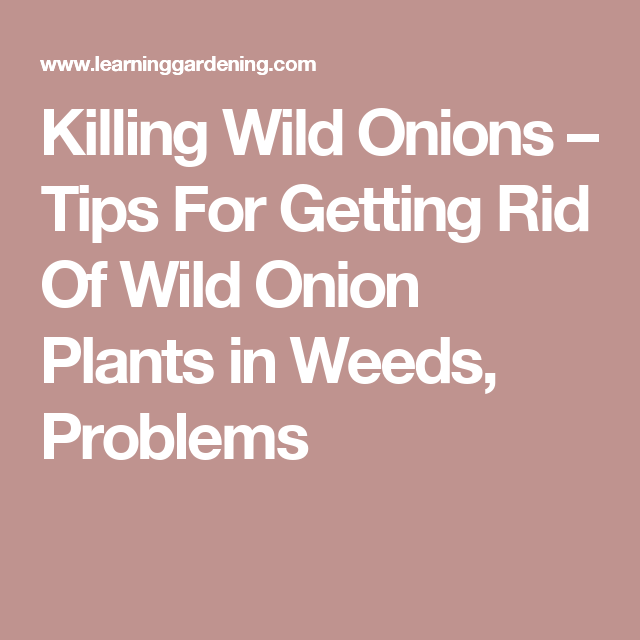 Killing Wild Onions – Tips For Getting Rid Of Wild Onion Plants in Weeds, Problems