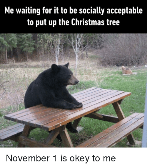 Bear Picnic Table Fasting Meme Google Search Funny Memes Funny Jokes Funny