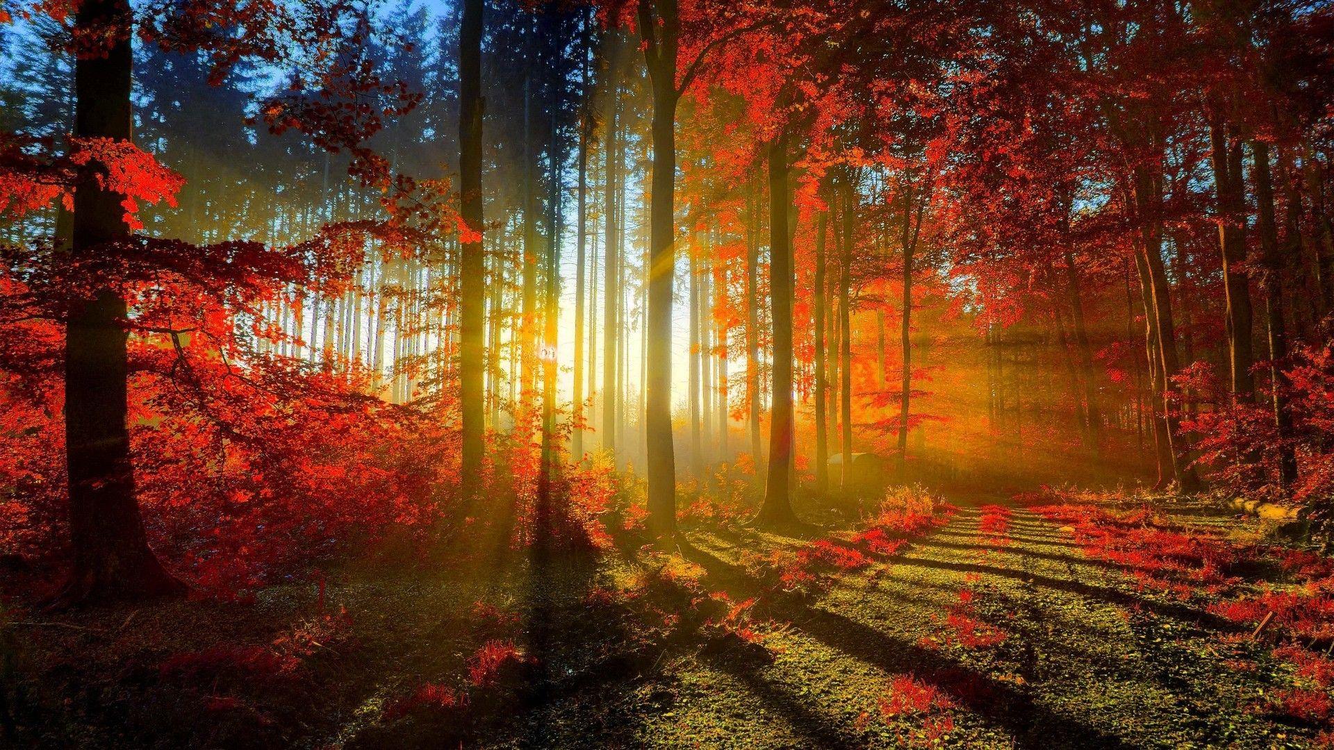 foto de Amazing Beautiful Free Nature Wallpapers HD Top Free Wallpapers HD ...