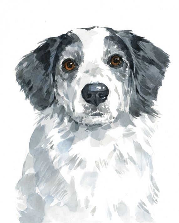 David Scheirer Dog Art Watercolor Cat Dog Paintings
