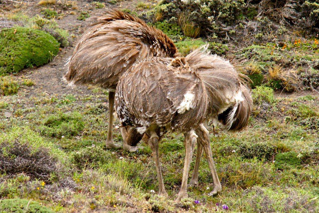 Emu Mobili ~ Sedie da giardino di emu mobili per l arredo esterno