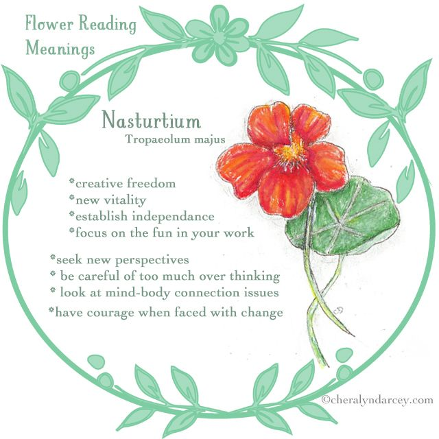 Cheralyn Darcey Flower Reading Oracle Cards Flower Meanings Flowers Nasturtium