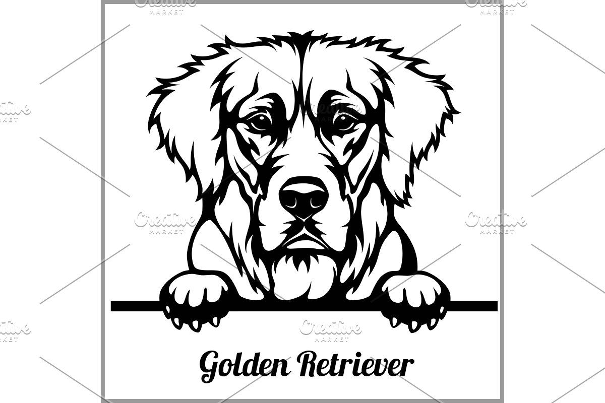 Golden Retriever Peeking Dogs In 2020 Golden Retriever