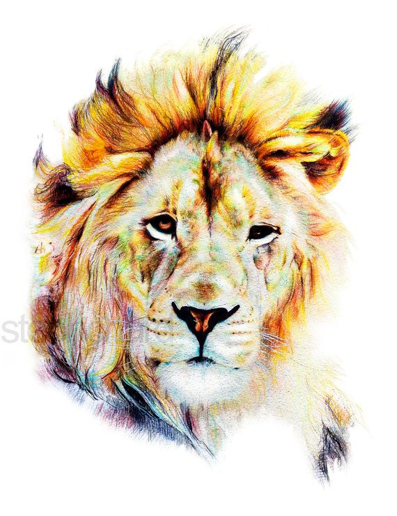 Lion Crayon Sur Papier Impression Numerique Animal Drawings