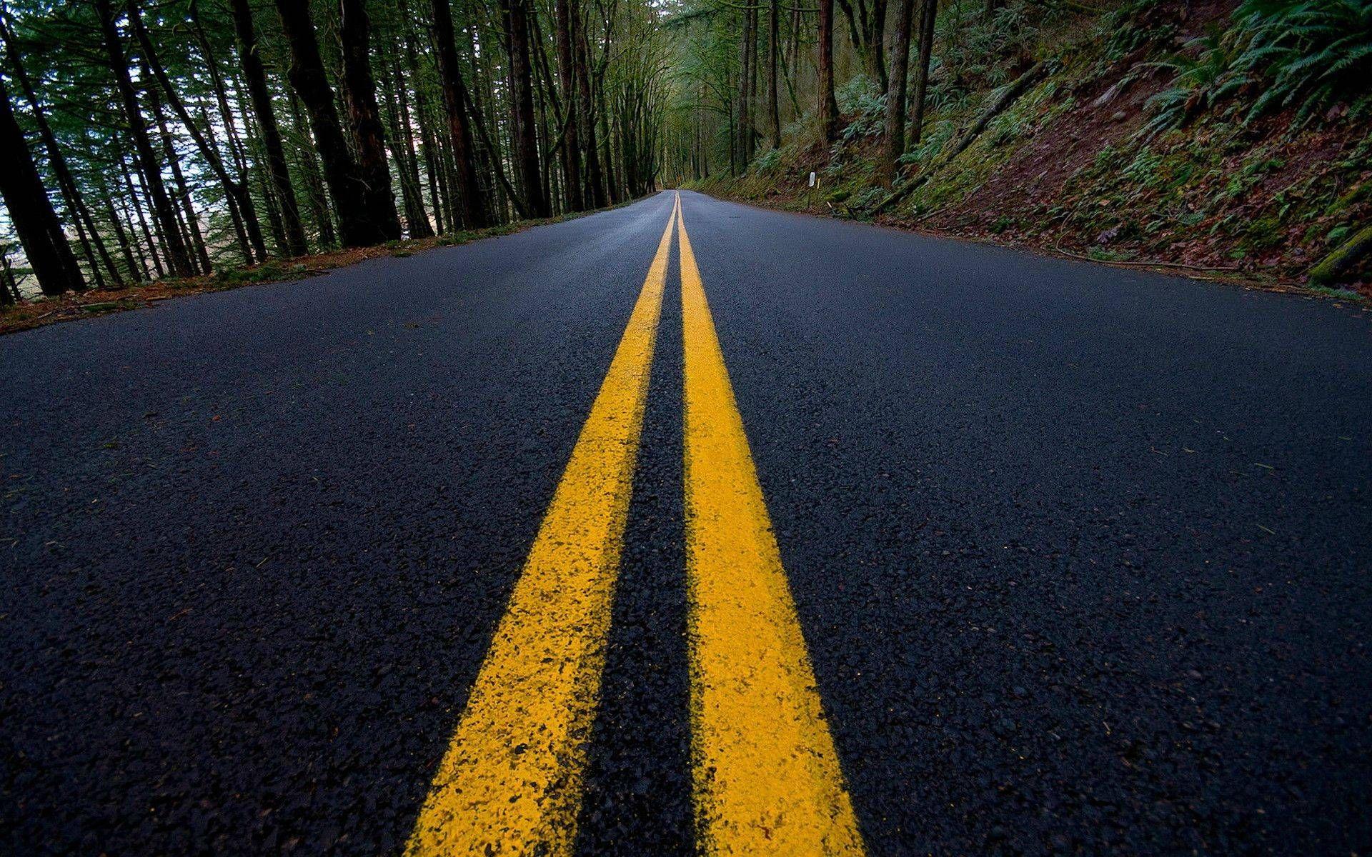 Road Marking Turn Trees Asphalt Wallpaper Blur Background Photography Dslr Background Images Picsart Background