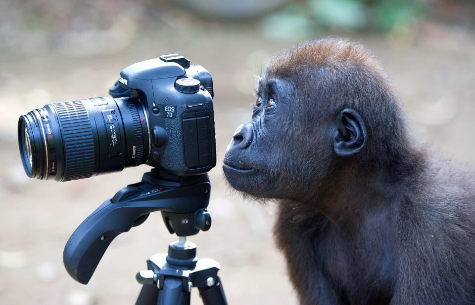 Фото маленькой, видеооператор смешные картинки