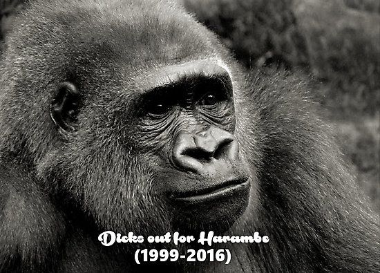 d cks out for harambe harambe photographic prints pinterest