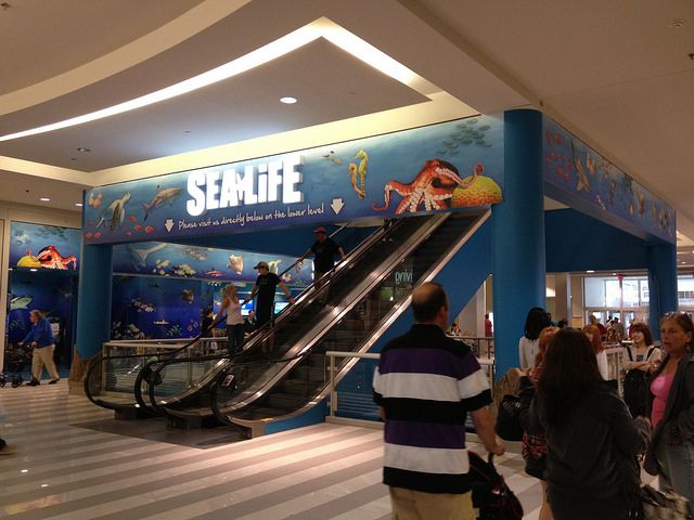 Sea Life Aquarium at Mall of America in Bloomington, MN ...
