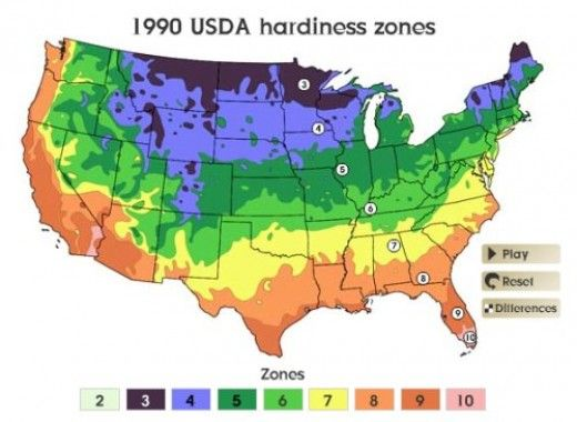 Find The Best Times To Plant Caladium Bulbs Use This Hardiness Zone Map