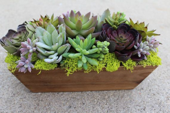 Artificial Succulent In A Rectangle Wood Box Artificial Succulent Arrangements Artificial Plant Arrangements Artificial Plants Indoor