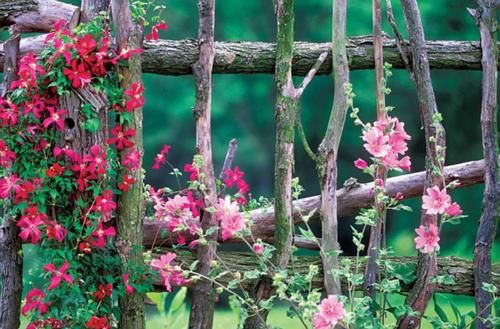 love the branches for fence