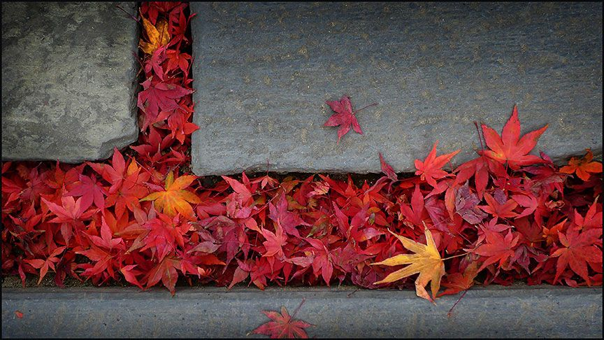 Leaves9832web by Pelicanh