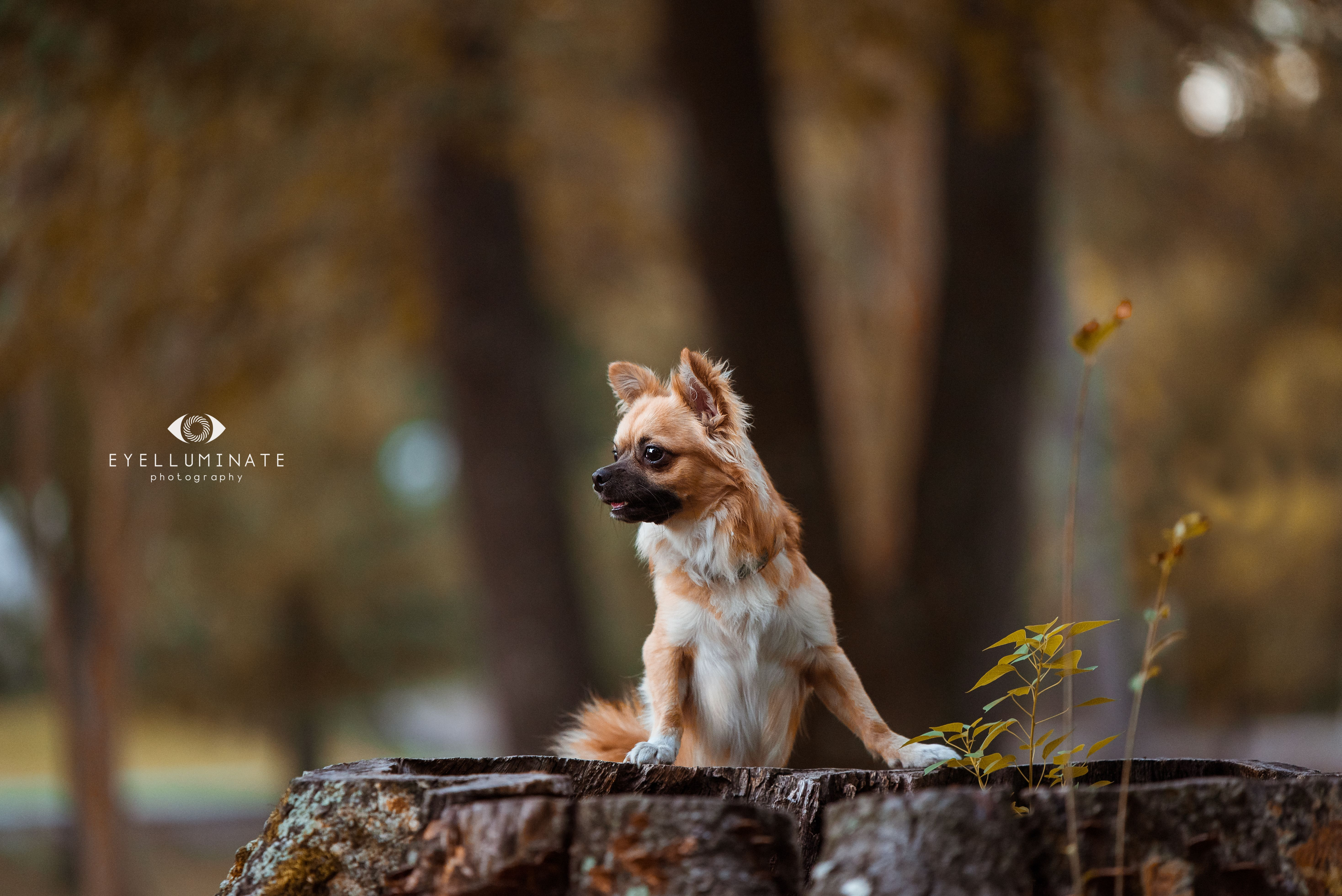 Professional Photo Of Puppy Standing On Tree Stump In October Pet