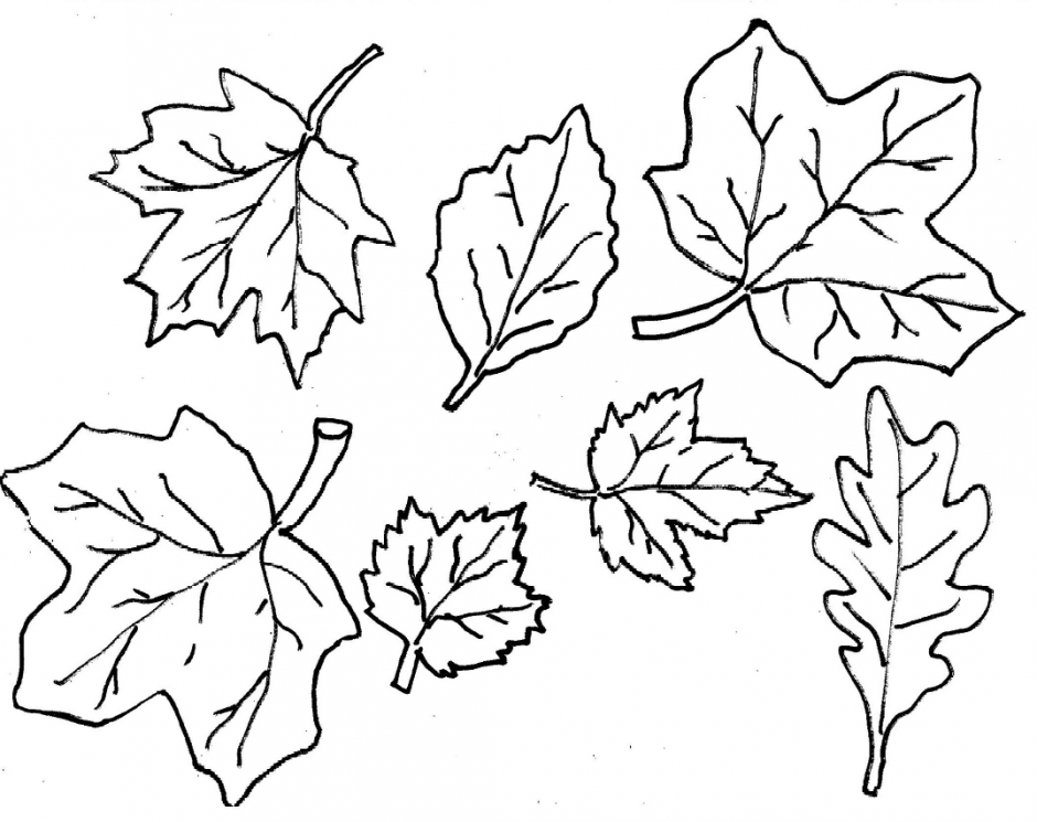 Autumn leaf coloring page  Google Search  School Bus