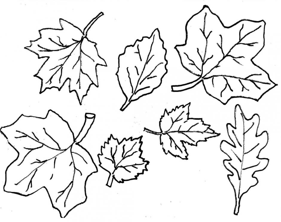 Листья деревьев раскраска распечатать