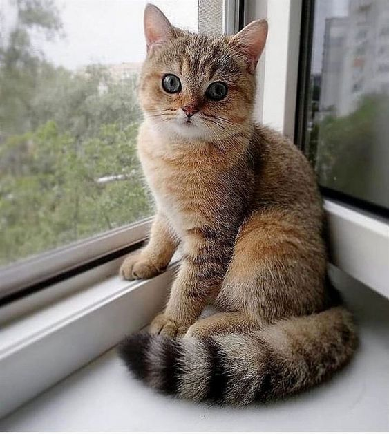 Beautiful Cat By The Window Cattail Beauty Window Cat Cute Cats Pretty Cats Cute Animals