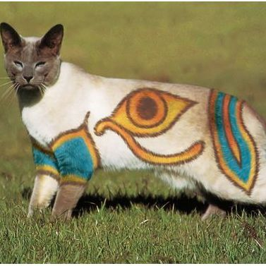 Dyed Cats Pikachu Dyed Cat Cute Animals Egyptian Cats Cats