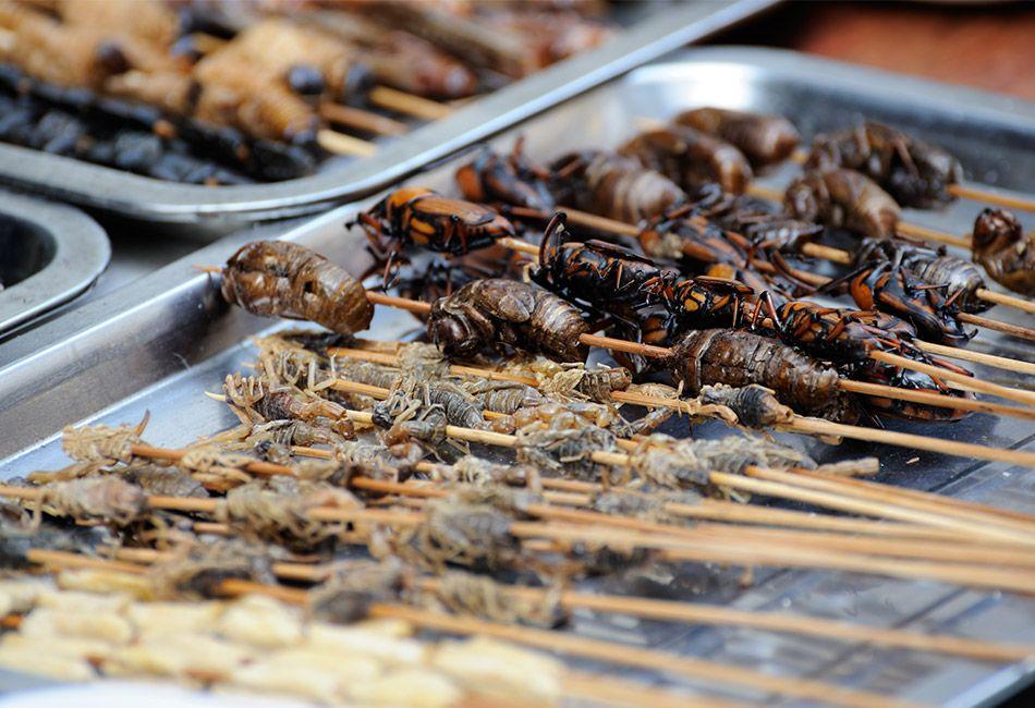 Liebe Feinspitze, esst endlich Insekten! | Insects | Pinterest ...