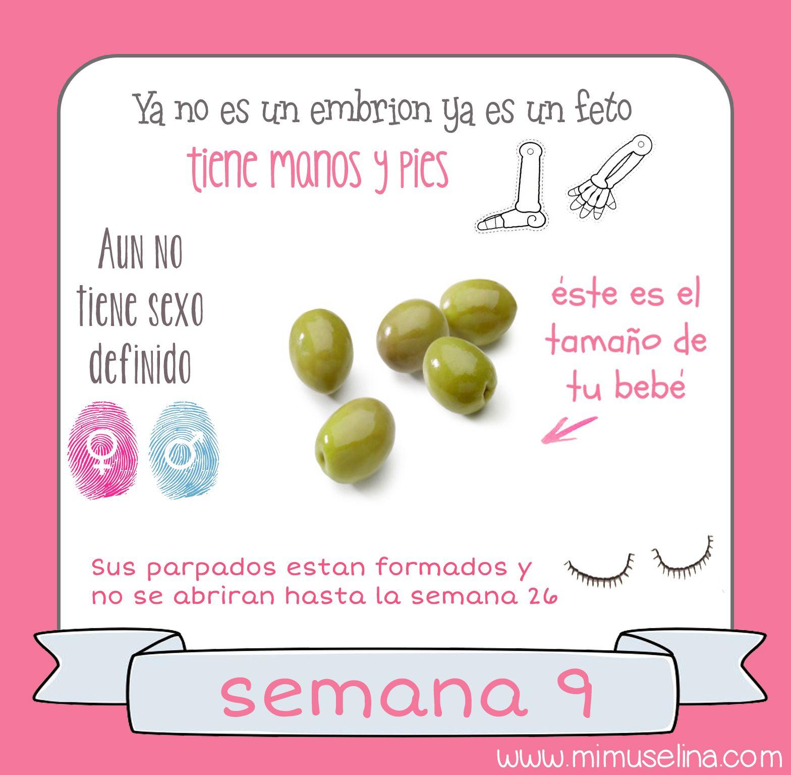 9 embarazo tamano y