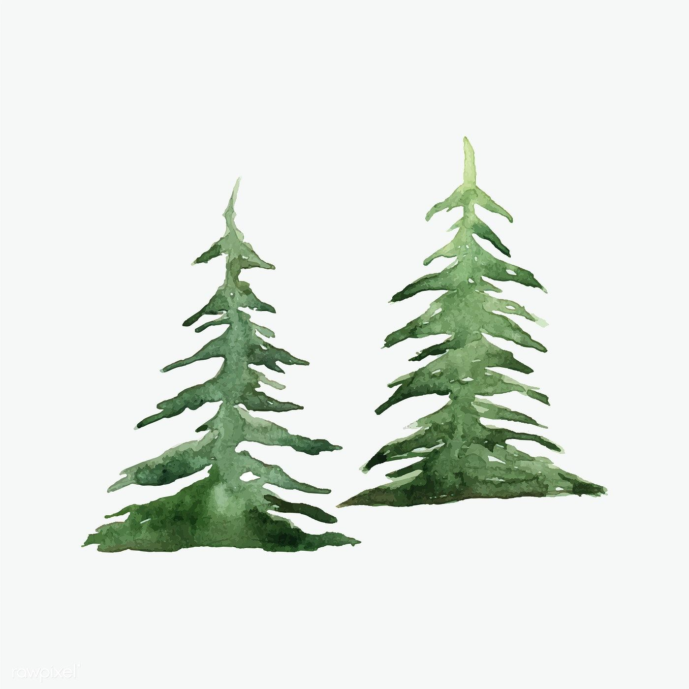 Pine Trees Painted By Watercolor Vector Free Image By Rawpixel