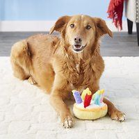 The Musical Birthday Cake Plush Dog Toy Lets Your Pooch Have His And Play
