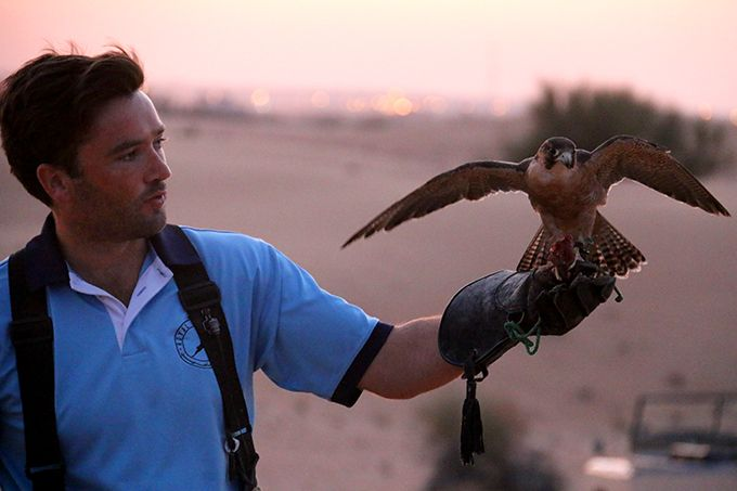 Image result for Falconry Experience dubai