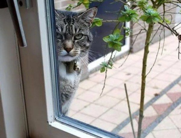 Creepy Cat Looking Through Window Types Of Cats Silly Dogs Funny