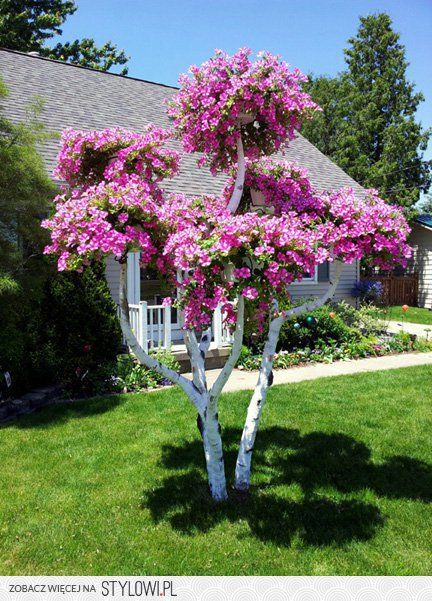 Pin By Aga On Ogrod Garden Trees Garden Design Front Yard Landscaping Design