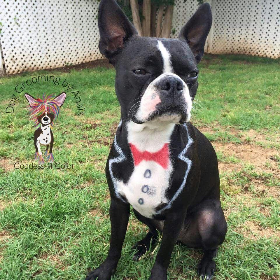 Wonderful Terrier Bow Adorable Dog - 64669edee1b86745df14bedb4b700d10  Graphic_496248  .jpg