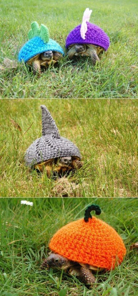 18 Cute Cozies Your Tortoise Can Rock This Winter #crochetturtles ha ha too funny ....crochet turtles...I love the shark one the best #crochetturtles