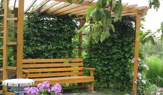 перголы для винограда фото