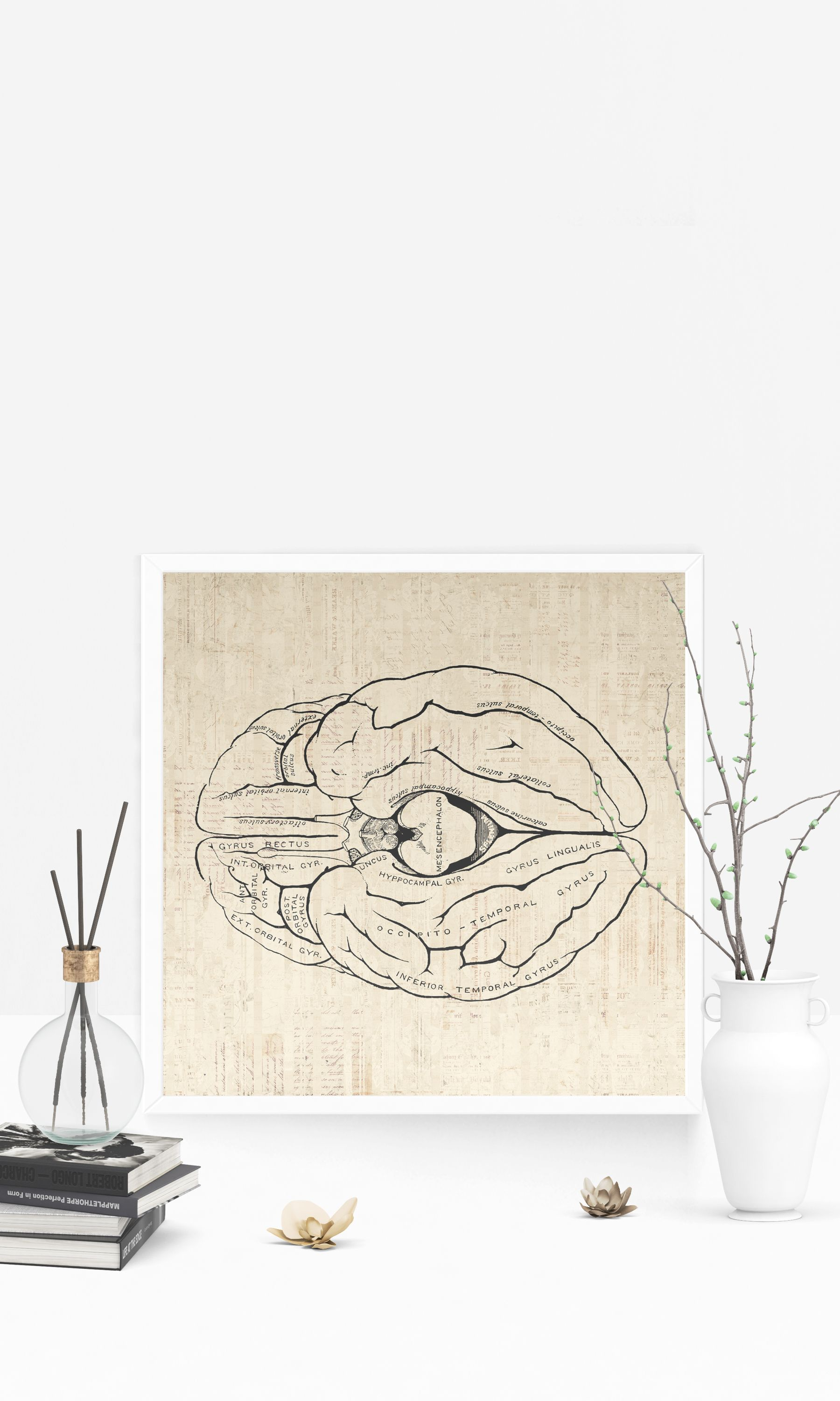 Clic Brain Diagram Wall Art Print Medical Anatomy Themed Home Decoration Antique Or Poster With A Vintage Script Paper Style Office Bedroom