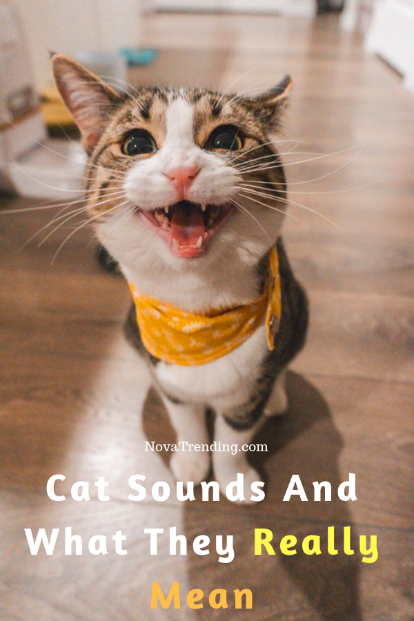 The Weird 6 Cat Sounds Meaning Cats, Puppy care, Cat lovers