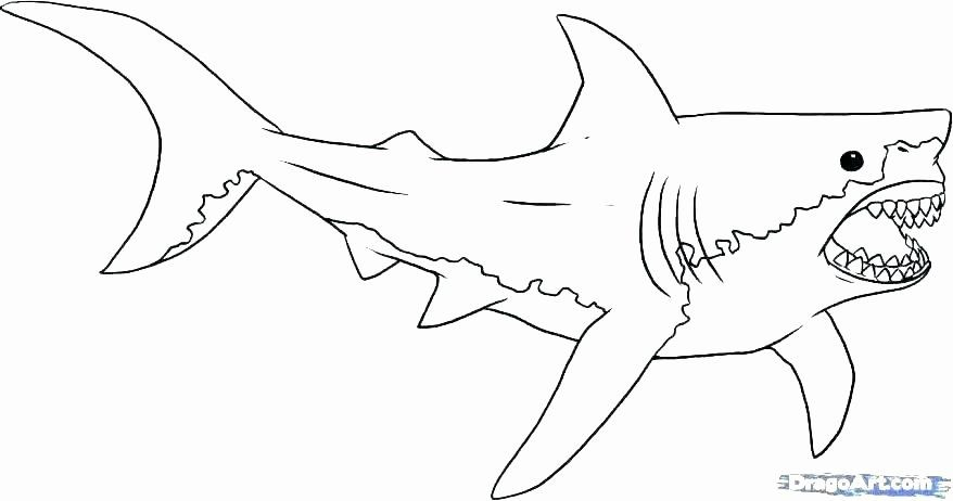 Great White Shark Coloring Page Beautiful Realistic Shark Coloring