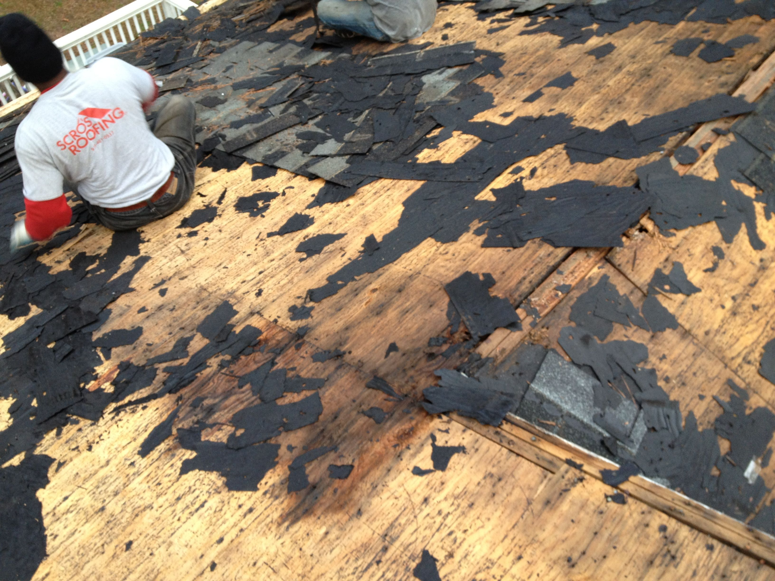 Damaged Wood Rotted Roof Deck Wood Rot Pinterest