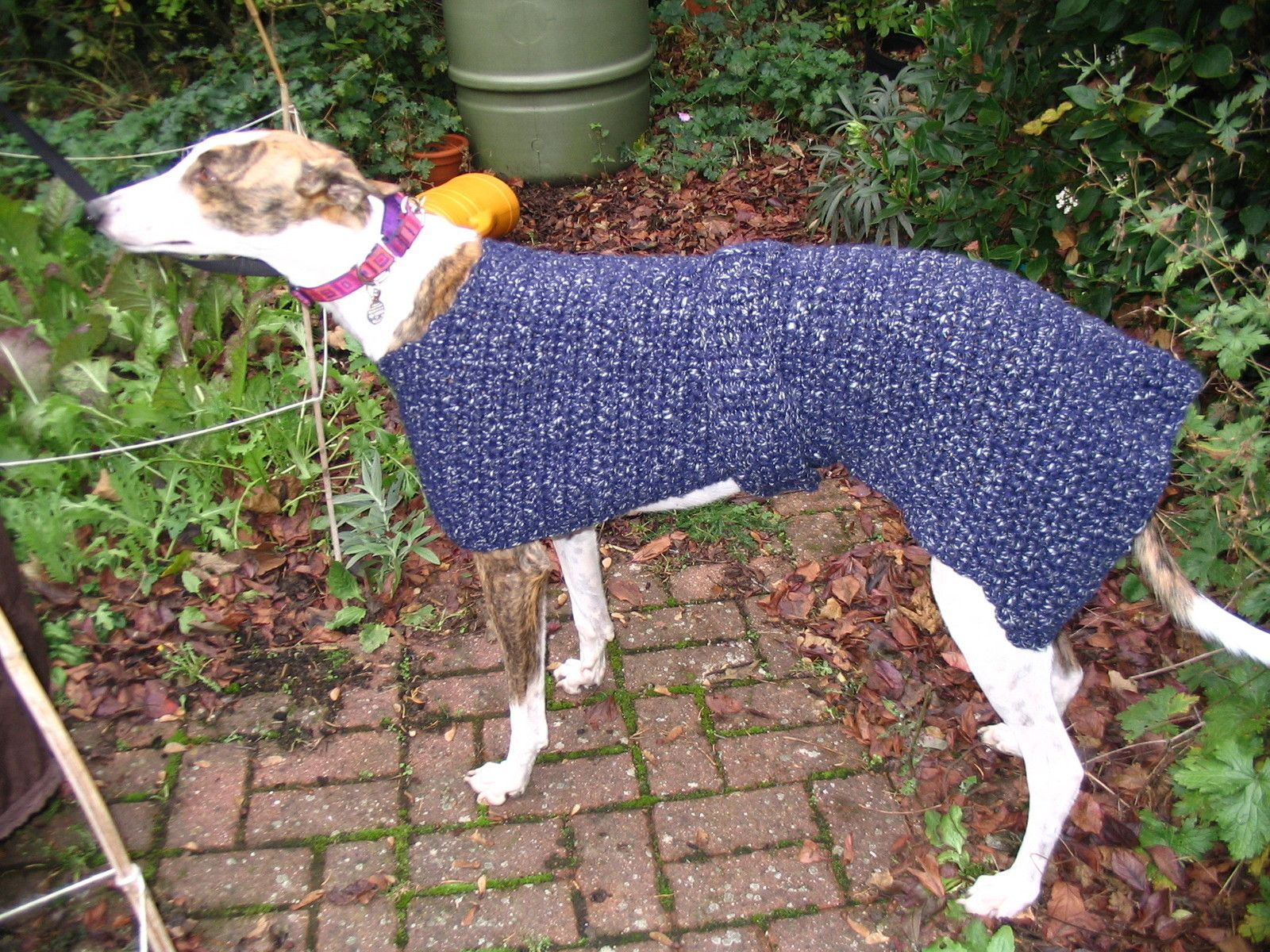 Crocheted Greyhound Coat | Knitted dog sweater pattern ...