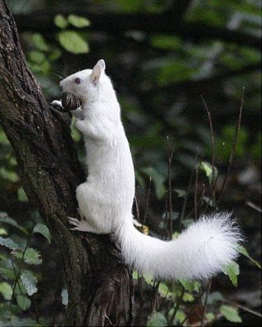 Photo of squirrel. He's just a squirrel trying to get a nut to move your butt