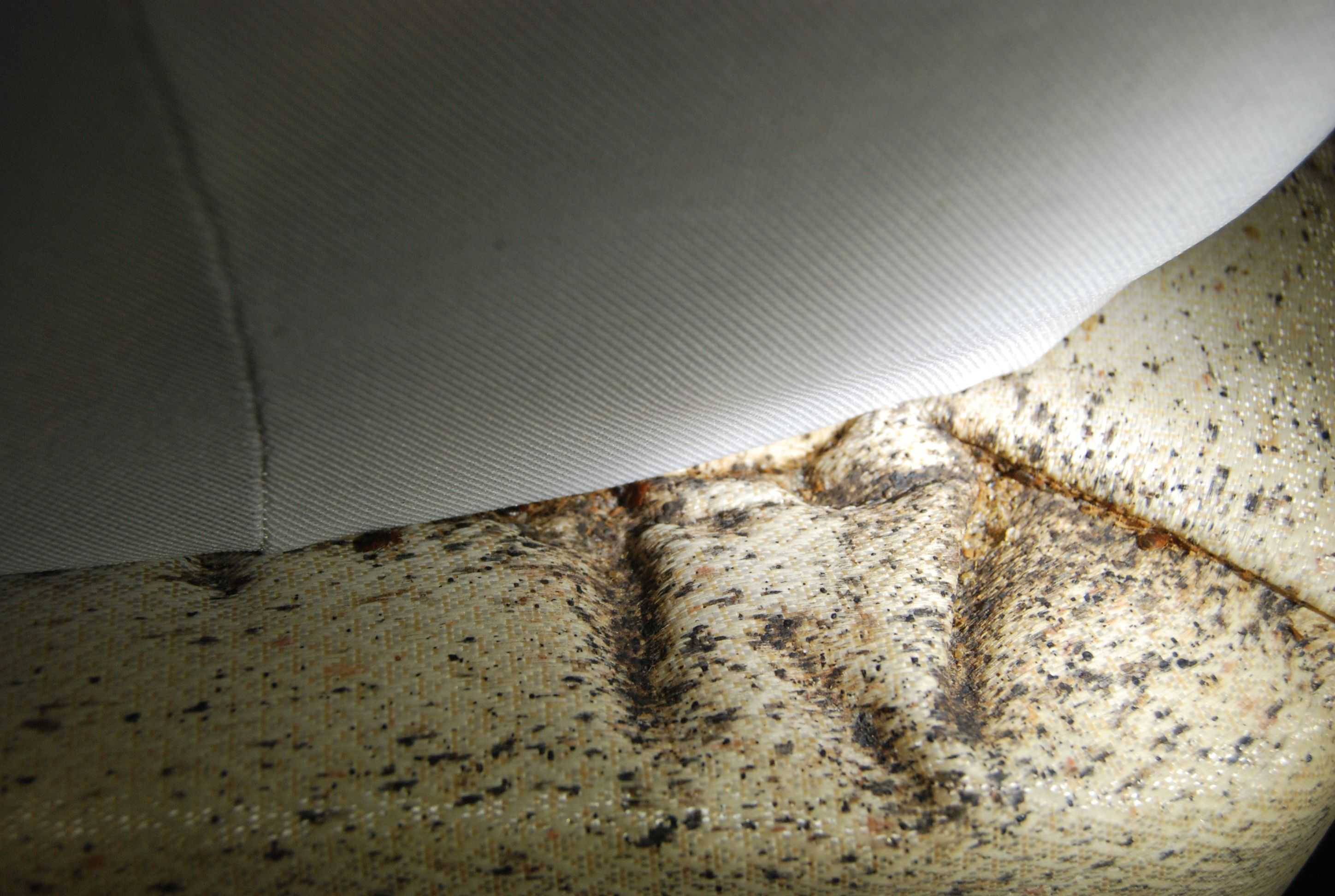 Bed Bug Droppings Accumulation Bed Bugs And Related Bed