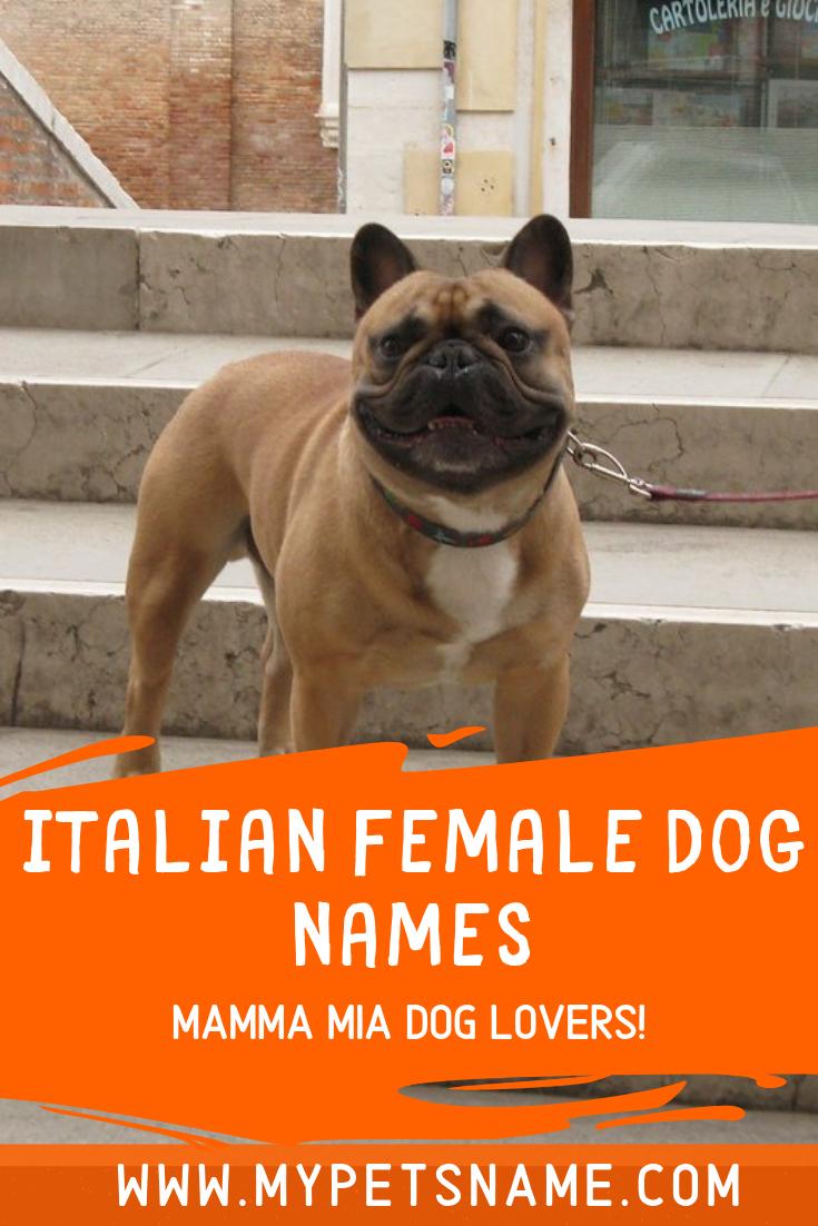 Italian Female Dog Names Dog Names Female Dog Names Girl Pet Names