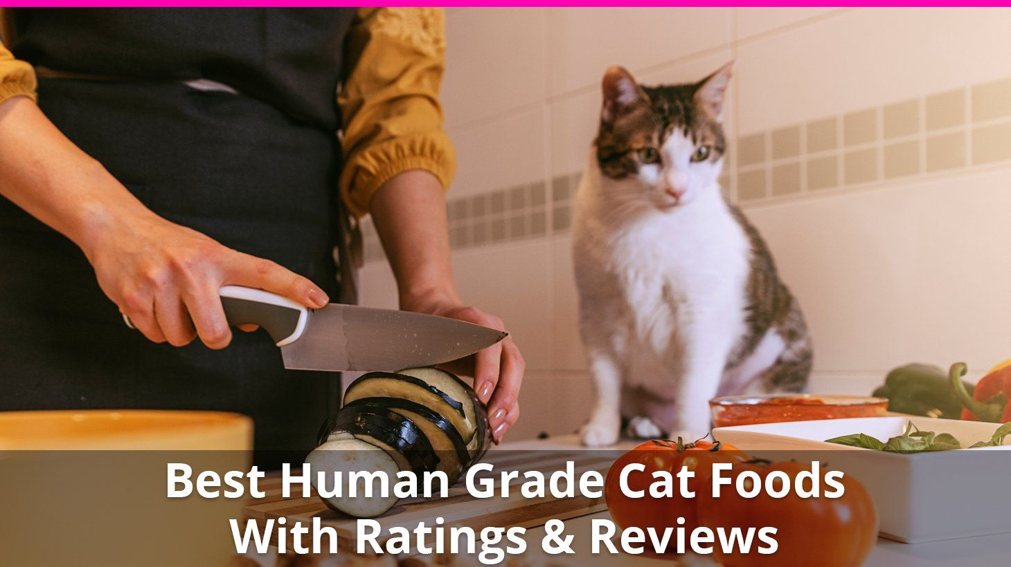 Best Human Grade Cat Food 😸 Reviews of the Top Wet and Dry