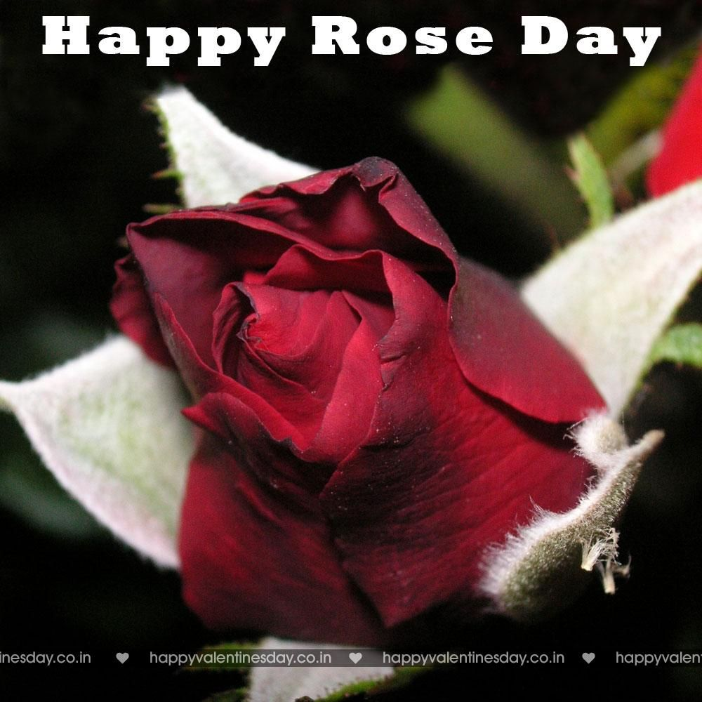 Rose Day - history of valentine day - http://www.happyvalentinesday.co.in/rose-day-history-of-valentine-day/  #DownloadHappyValentinesDayPictures, #FreeValentinesCards, #HappyValentinesDayBoyfriend, #HappyValentinesDayFreeCards, #HappyValentinesDayFreeEcards, #HappyValentinesDayMouse, #HappyValentinesDayQoutes, #HappyValentinesDayToMyFriends, #HappyValentinesDayVideoCard, #WeddingAnniversaryCards