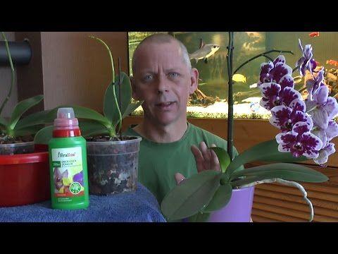 Orchideen schneiden - pflegen - umtopfen